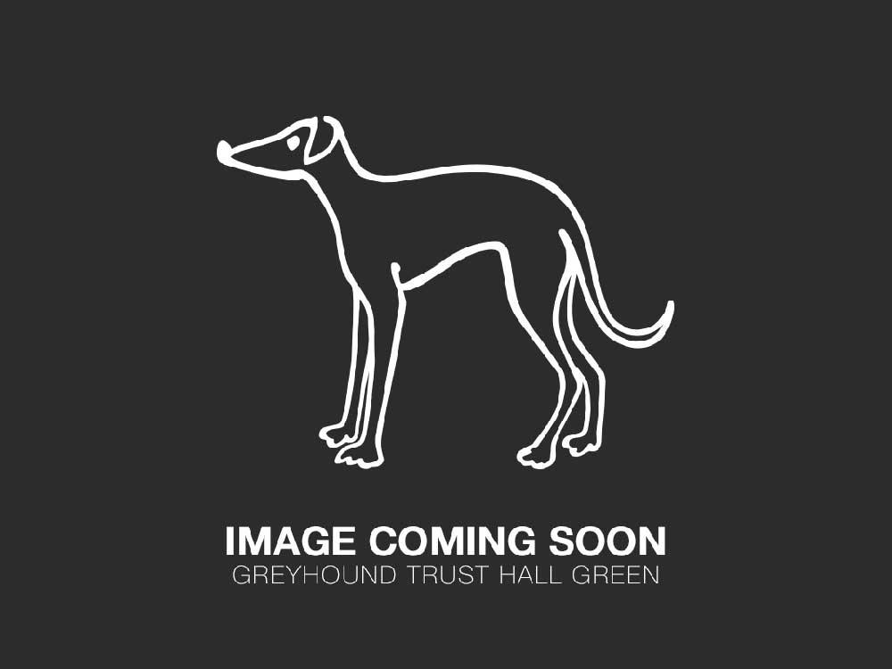 https://www.greyhoundtrusthallgreen.org.uk/happy-greyhound-homings/happily-homed-flicky/