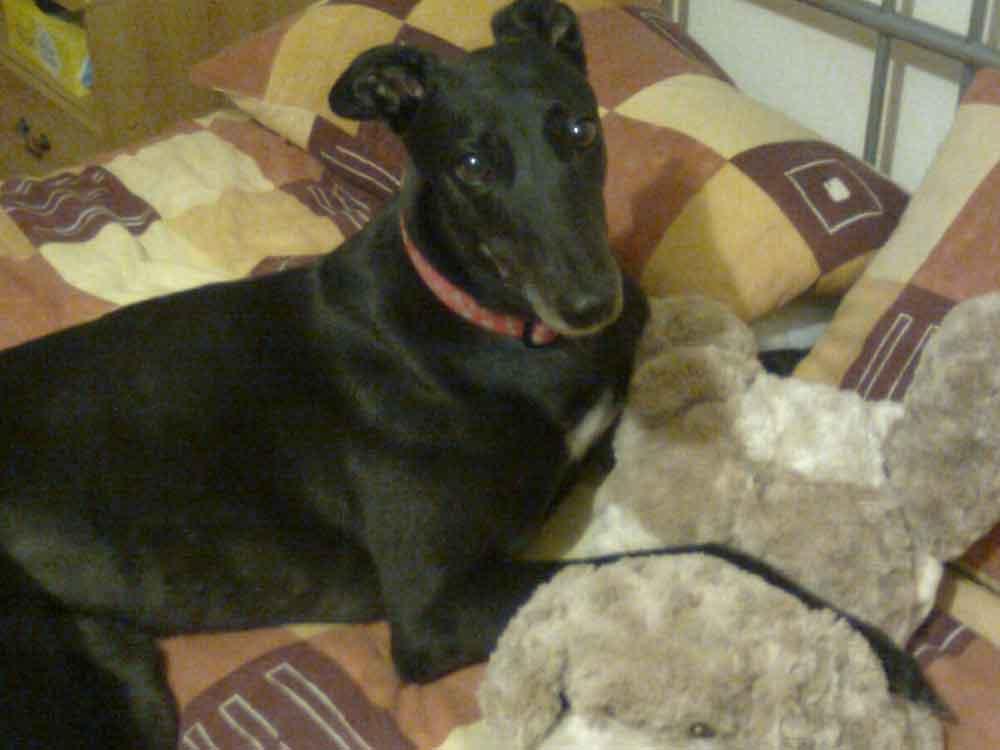 In memory of Lassie